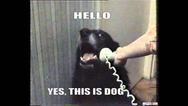 yesthisisdog